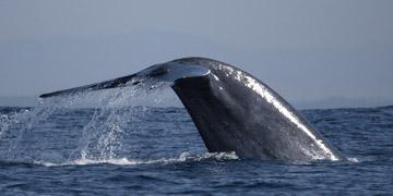 Whale & Doplphin tours in sri lanka